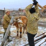 Профільні комісії Біляївської райради визнали порушення