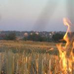 В Одеській області оголошено 5-й рівень пожежонебезпеки