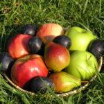 Яблучний Спас або Преображення Господнє