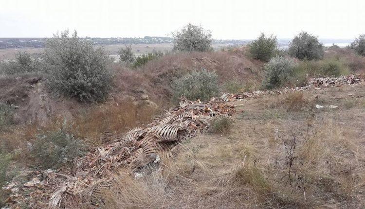 скелети1