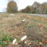 Нові штрафи за незаконну вирубку лісових насаджень