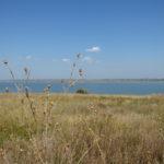 Презентація енциклопедії рослин узбережжя Куяльницького лиману