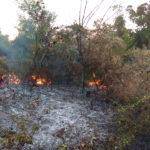 Збільшено штрафи за спалювання рослинності
