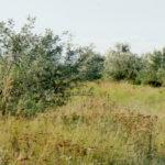 """Замкнуте коло, або що очікує """"власників"""" земельних ділянок на околиці с. Протопопівка"""