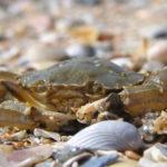 31 жовтня – міжнародний день Чорного моря